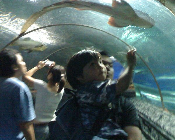 Singapore – Underwater World Sentosa – Lovely creatures